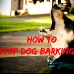 Stop Dogs Barking APP | Now Control Dogs When They Barks