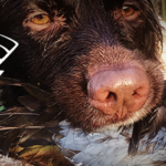 Hunt Wild Wisconsin App | A Hunting Application For Android & iOS